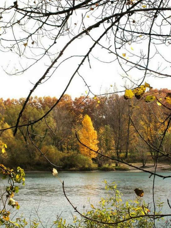 automne 2.jpg