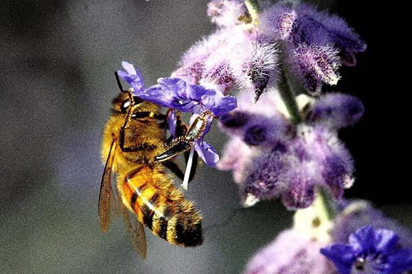 abeille_5495.jpg