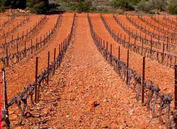 blog - Vignes  vers Salses - P1000449.jpg