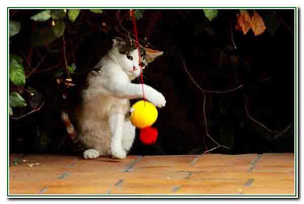 5 - le chaton joue - 2607.jpg