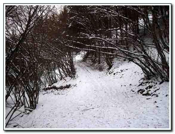 neige_fév. 2015_066.jpg