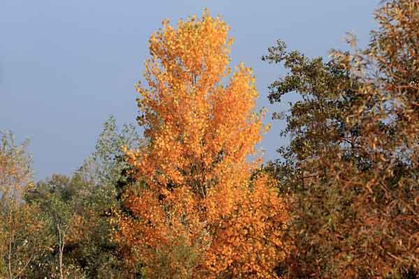 automne_1182.jpg
