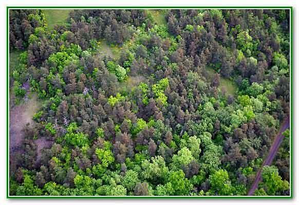 5546_un-beau-tapis-d'arbres.jpg