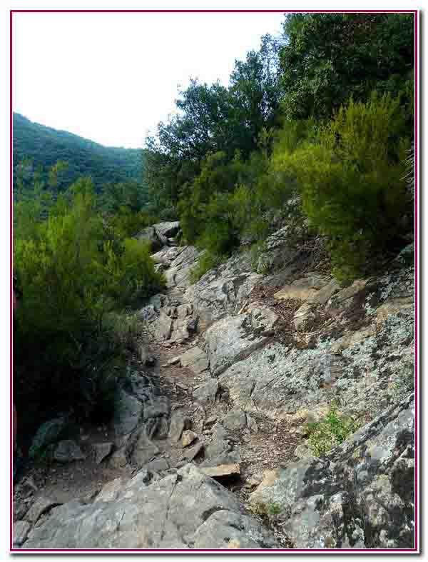 chemin rocailleux.jpg
