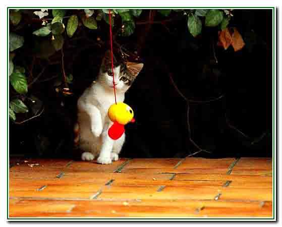4 - le chaton joue - 2606.jpg