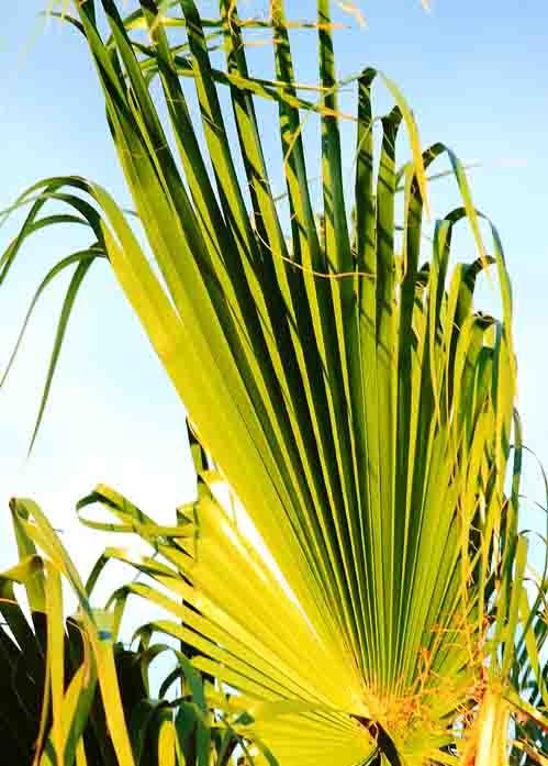 blog-palmier.jpg
