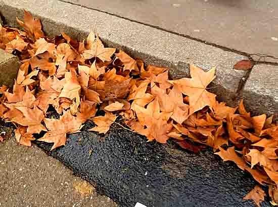 blog feuilles de platane - P1010946.jpg