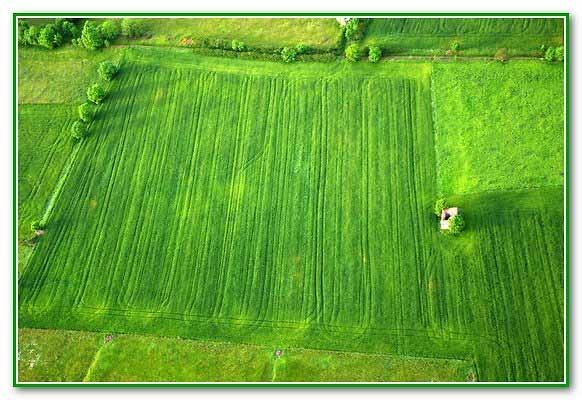 5605_-un-tapis-vert.jpg