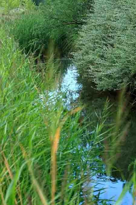 vieilles eaux 2.jpg