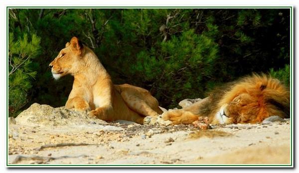 Sigean - réserve africaine2509 - Copie.JPG