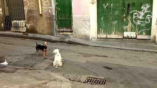 blog-deux chiens_3663.jpg