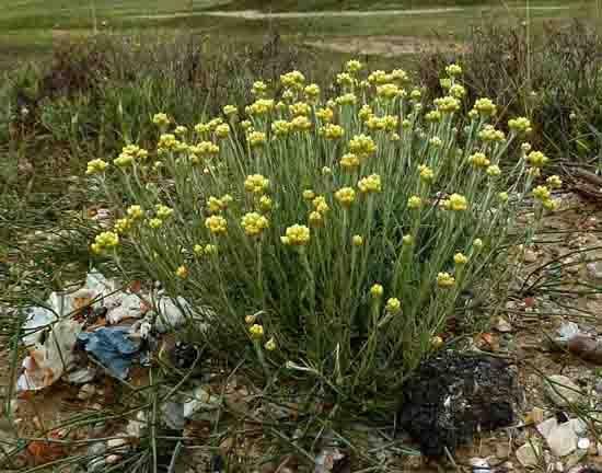 fleurs de talus - 498 2.jpg