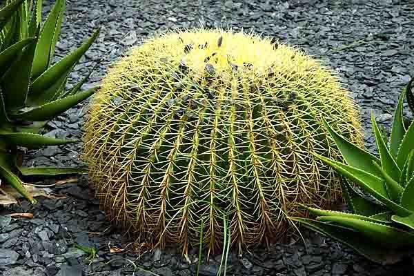 9921_un beau cactus.jpg