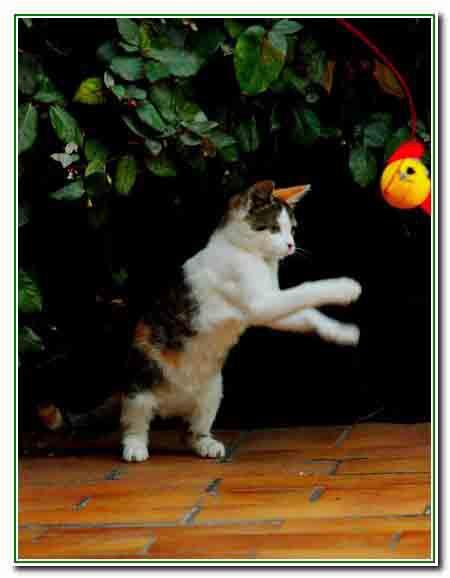 6 - le chaton joue - 2626.jpg
