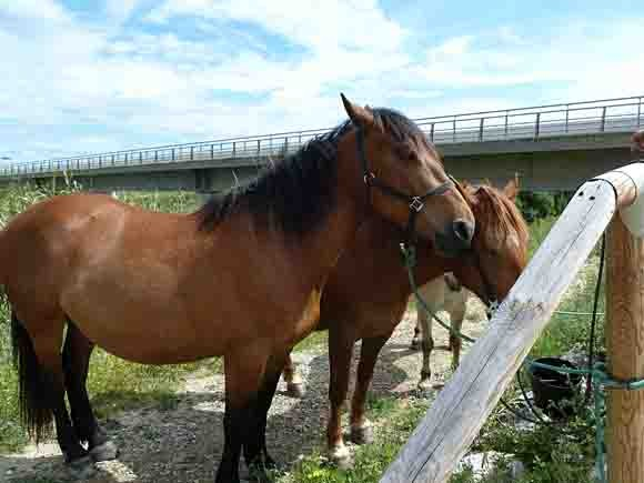 blog chevaux roulotte -P1020457.jpg