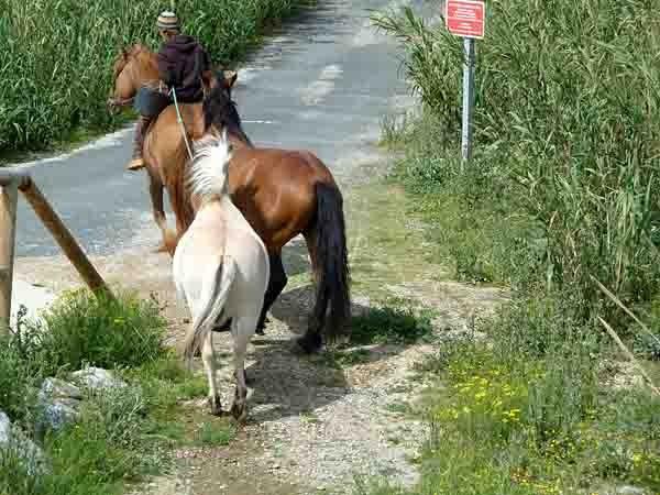 blog chevaux roulotte -P1020459.jpg