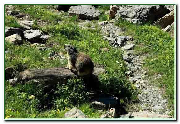 marmotte (13).JPG