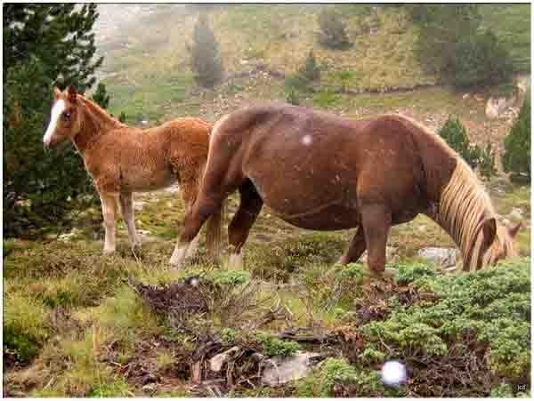 00012 - val d'aran -chevaux sous la neige.jpg