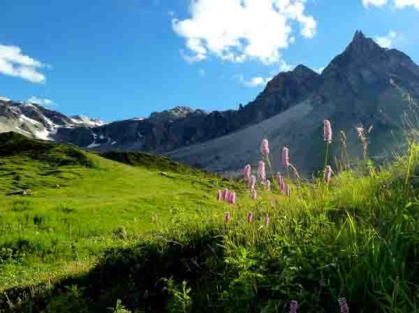 fleurs de montagne_P1050057.jpg