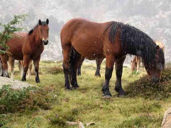 0779 - blog - val d'aran -chevaux sous la neige.jpg
