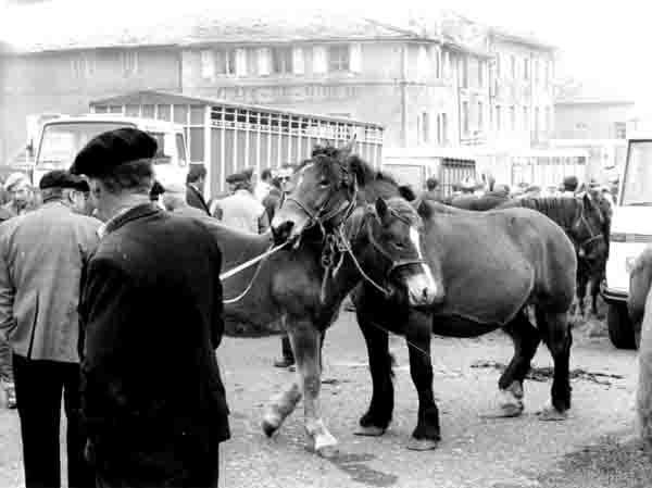 1986 - foire aux chevaux de Fay sur Lignon - jument et poulain copie.jpg