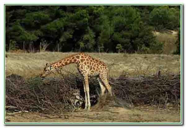 Sigean - réserve africaine2481 - Copie.JPG