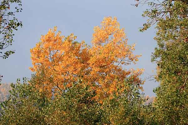 automne_1177.jpg