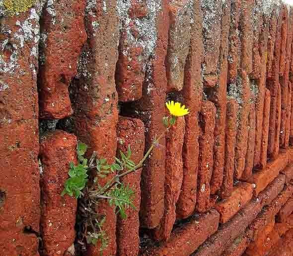 fleur jaune.jpg