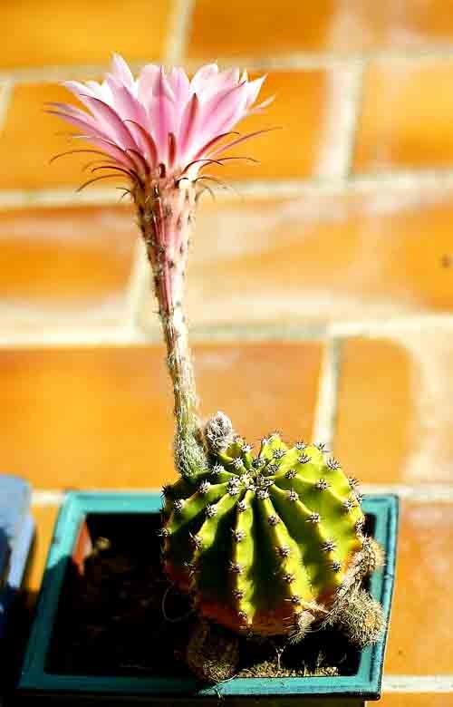 cactus 1347.jpg