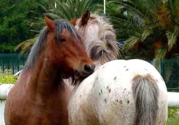 chevaux au pré - détail.jpg