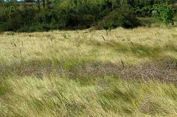 prairie de l'étang.jpg