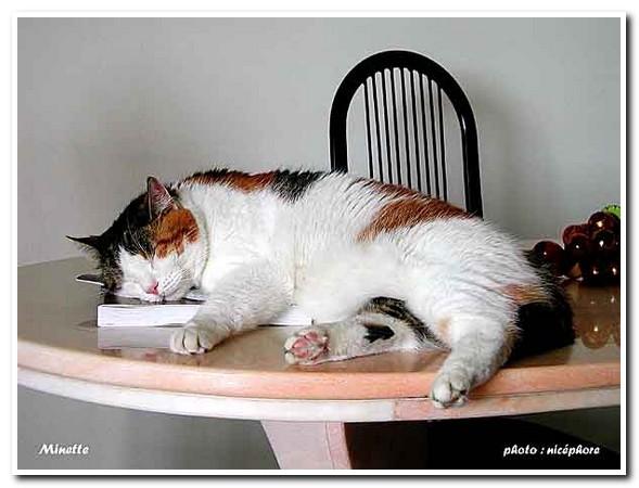 chat- minette en juillet 2003.jpg