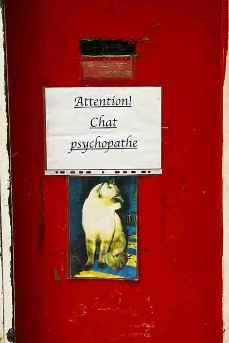 chat psychopate.jpg