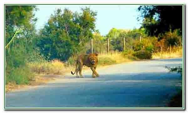 Sigean - réserve africaine2517 - Copie.JPG