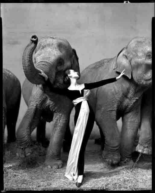 avedon-dovima-with-elephants1 copie.jpg