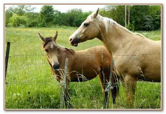 8283_chevaux en pâture.jpg