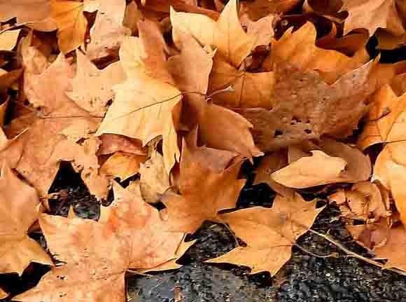 feuilles dans le caniveau.jpg