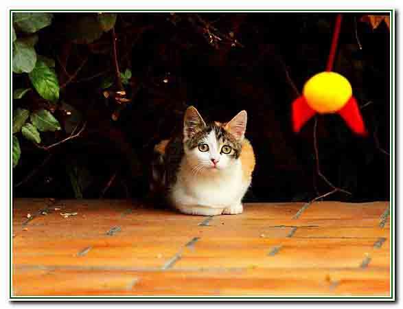 1 - le chaton joue - 2603.jpg