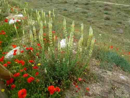 fleurs de talus - 501.jpg