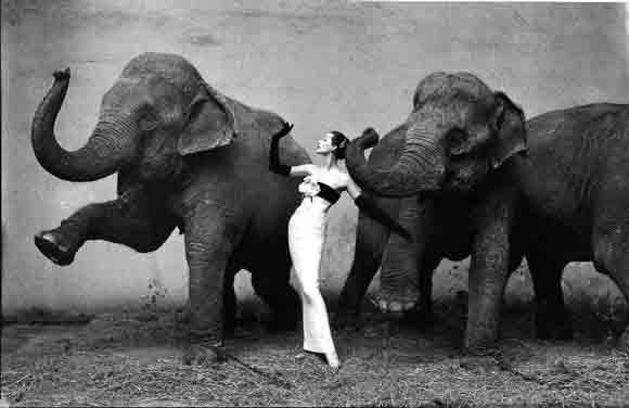 Avedon Elephants copie.jpg