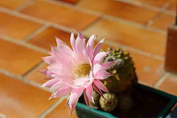 Cactus 1346.jpg
