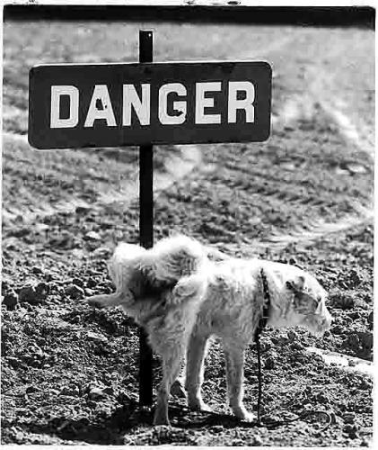 maltete - danger.jpg