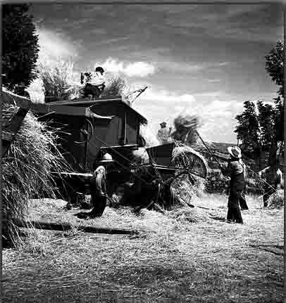 moissons en Auvergne 1958 copie.jpg