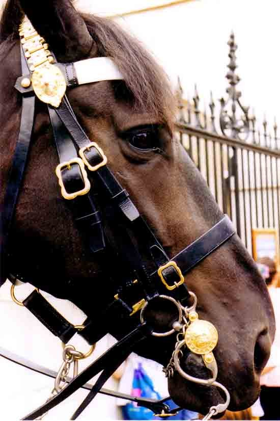 1996 - cheval de Horse guards.jpg