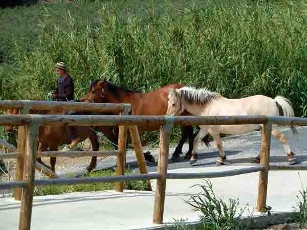blog chevaux roulotte - P1020460.jpg