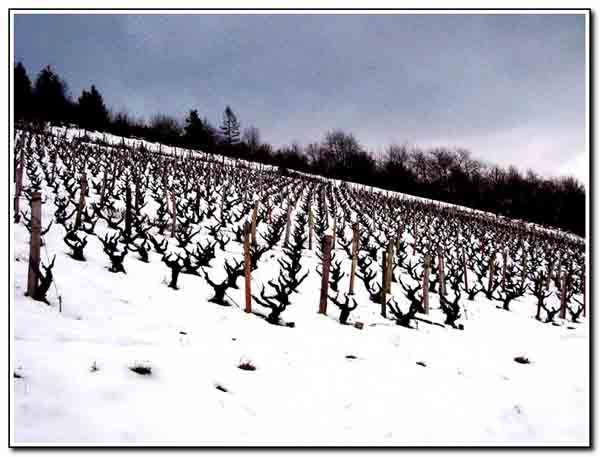 neige_074.jpg