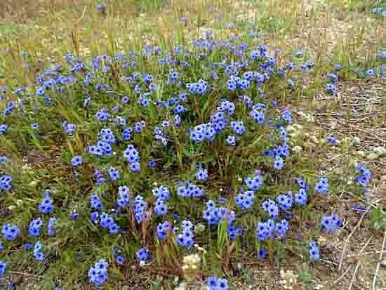 fleurs de talus - 495.jpg