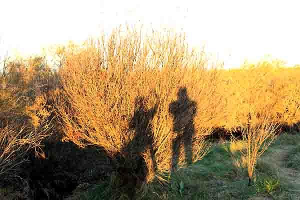 silhouettes_6968.jpg
