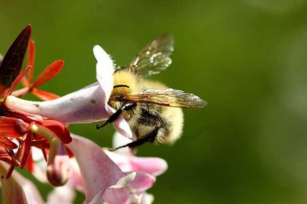 abeille_5707.jpg