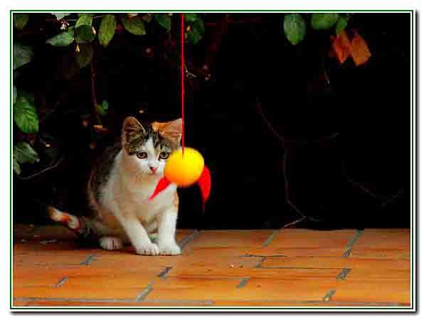 2 - le chaton joue - 2613.jpg